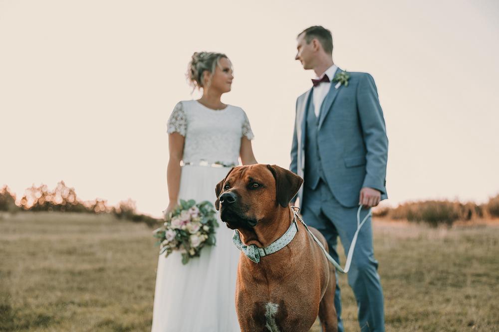 Hochzeitsfotos Plauen